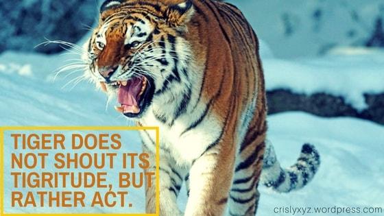 Tiger v1
